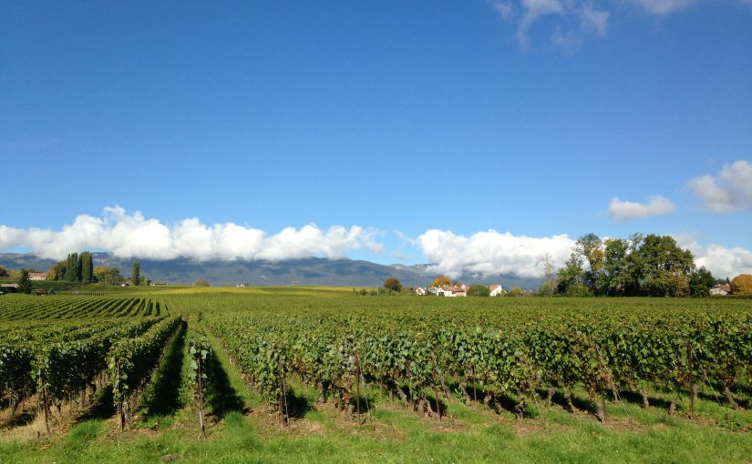 Vendanges '13 : faisons le point!